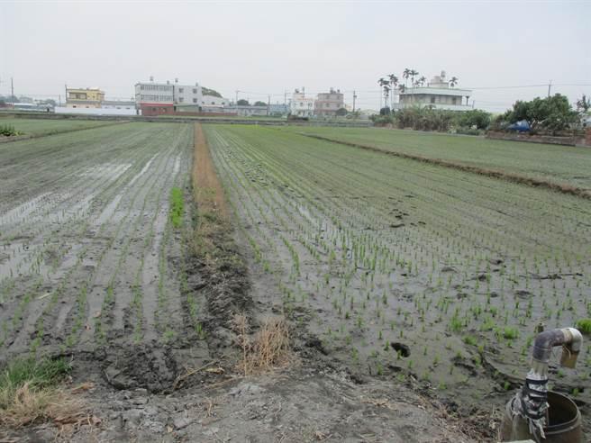 彰化拥有4万8千多公顷稻田,以往供应水量有354万吨,现在仅剩103顿,锐减近7成。(县府提供/吴建辉彰化传真)
