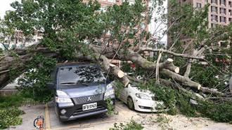 台電公司20年老樹木倒塌 砸毀蘆洲停車場3汽車