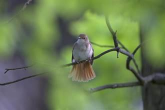 最顧人怨鳥類 全場直指這兩種:說到就氣