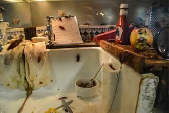 廚房變蟑螂巢穴 一噴衝出上百隻 屍體鋪滿地屋主發毛