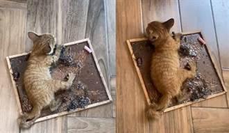 幼貓遭黏鼠板黏住 女急救援被早餐店阻止 網炸鍋揚言抵制