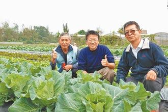 棄高薪當青農 有機耕作創佳績
