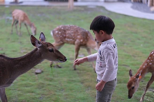 兒童節樂好康「玩全搜羅」 遊樂園、農場、海生館各有不同。(旅遊經提供)