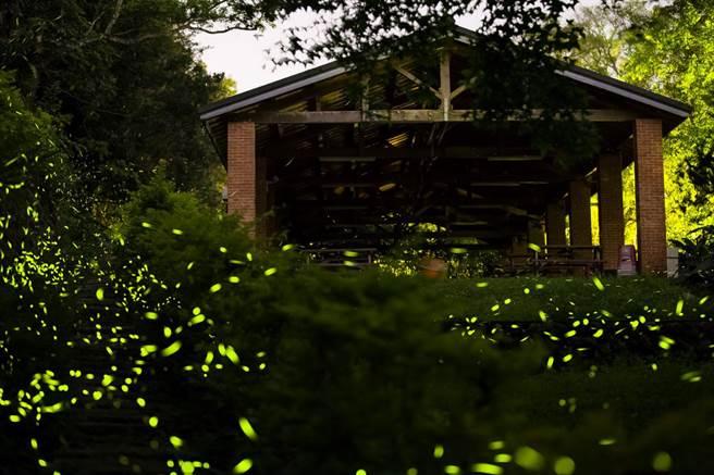 今年3月由農業局輔導,位於新北市新店區湖子內路100號的新北市農會文山農場,將舉辦一場盛大的螢火蟲季活動。(農業局提供)