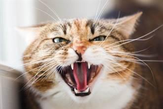 女房客突失蹤套房成煉獄 5隻皮包骨貓咪餓到分食同伴屍體