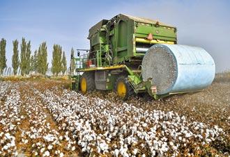 新疆棉花之亂扯人權問題 專家怒斥:歐美國關心過穆斯林?