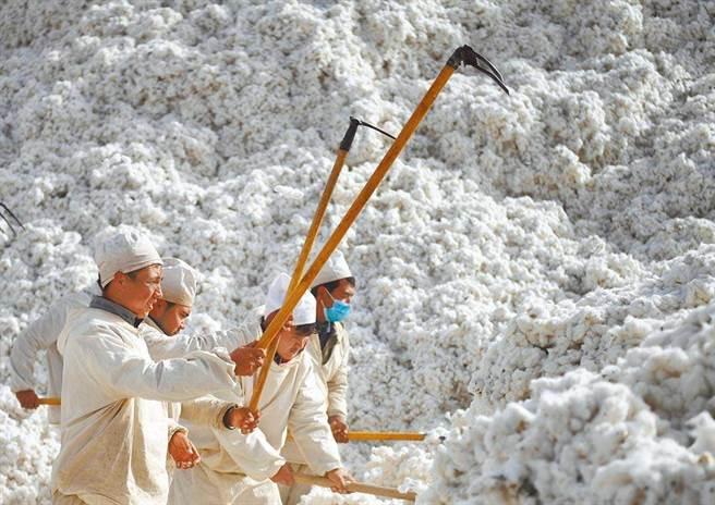 圖為「中國棉城」新疆阿瓦提。(新華社資料照)