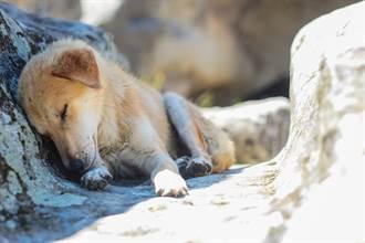 變態老翁性侵40隻流浪狗 被逮還強辯:牠們沒反抗