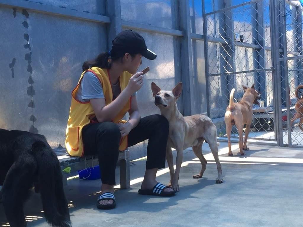 收容所爆量 議員促寵物晶片與GPS結合-桃園市每年有5千多隻走失、遊蕩的狗貓被補進收容所,導致收容所爆量,議員鄭淑方認為應做好源頭控管,建議師法歐美,評估將…