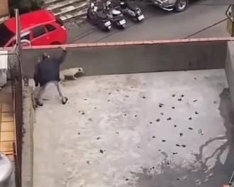 屋頂虐狗打斷棍子 施虐者不在結案 動保處挨批消極