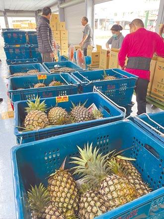 2噸鳳梨銷澳洲高運費 每顆賣400元