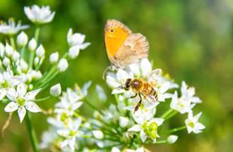 看到3大自然跡象有福了!蜜蜂蝴蝶預告發大財