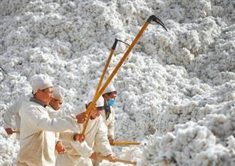 差點從A股下市 新疆棉救了這兩家公司