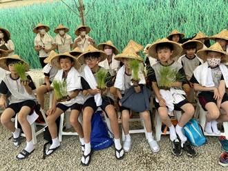 中市學童化身小小農夫 在最貴黃金稻田插秧