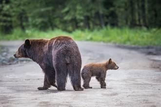 調皮4寶過馬路到處趴趴走 熊媽忙不過來差點被逼瘋