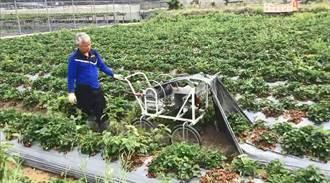 草莓塑膠布之亂 農糧署推廣農膜回收機給補助