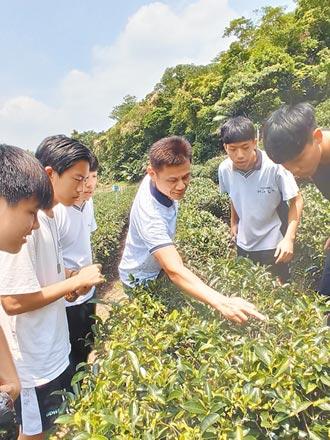 貼近三峽 北大高中種茶玩藍染