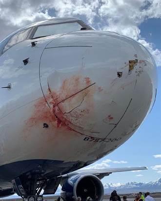 NBA》爵士空中驚魂記 包機撞飛鳥緊急迫降全隊無礙
