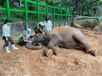 亞洲象「友愷」身體不適 北市動物園盼大家齊集氣
