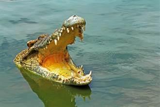 2大水中王者相遇 鯊魚大戰巨鱷 纏鬥10分鐘遭生吞