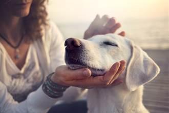 毛孩讀心術》收編前夫棄養犬不親近她 找寵物溝通一問淚崩