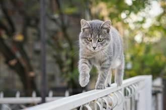 流浪萌貓疾步走來男蹲下迎接 高冷舉動網笑翻:被耍了