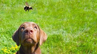 調皮汪星人一口咬蜜蜂  下秒「腫成胖達」百萬人瘋傳