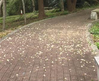 客家大院桐花季浪漫起跑 賞桐、祈福一次到位