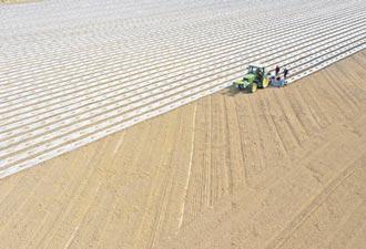 美國棉強制勞役 至今仍存在