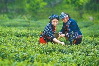外資難入 大陸茶葉第一股懸缺