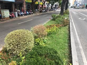 台灣大道新風貌 中市府打造分隔島成美麗花園
