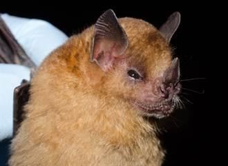 撿到被棄小蝙蝠帶回家養 洗乾淨後見真面目驚呆