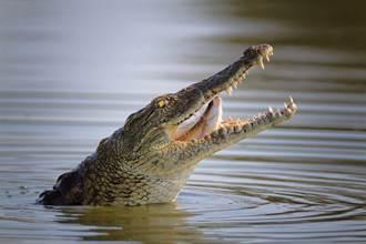 男以為釣到大魚 拉出魚線驚見3M巨鱷 糾纏1小時才脫困