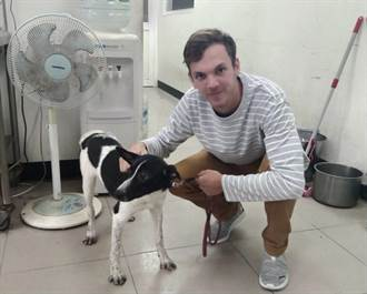 澳洲男高雄北上八里 認養米克斯犬只為一解鄉愁
