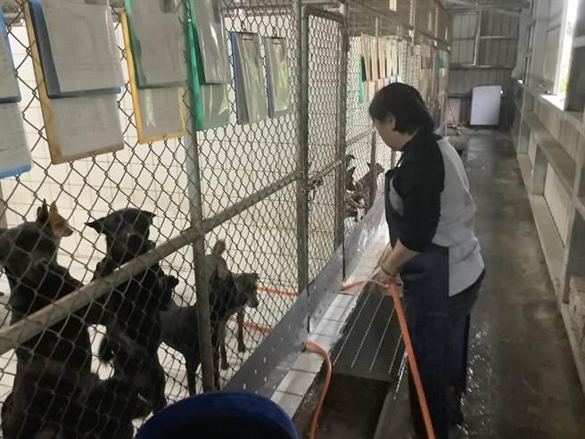 八里動物之家的動物受到工作人員細心照顧。(新北市動保處提供)