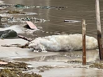 新北萬里海漂死豬驗出「非洲豬瘟陽性反應」新北動保處啟動管制