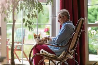 阿公患骨癌治療超煎熬 暖心貓化身看護每天黏條條