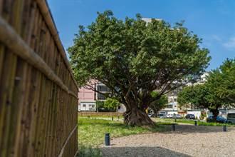 竹市老舊空地大改造 治安死角變身日式庭院