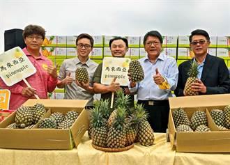 台商牵线屏东凤梨外销马来西亚 入境得先去冠