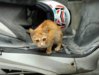 小病貓攔車求醫 巧遇新北動保員救援
