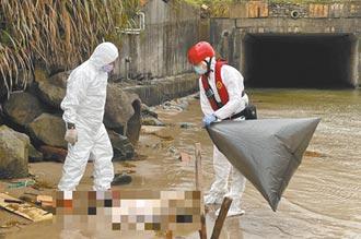 本島首例 萬里海漂豬驗出非洲豬瘟