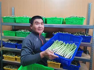 農村農工不足台南農業師傅招募中