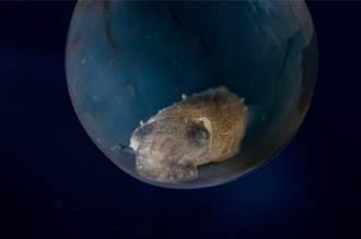 海底發現巨大異形蛋 沒有生物敢靠近 專家揭驚人奧秘