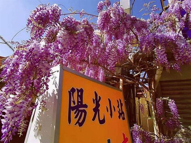 大梨山‧武陵山莊紫藤花爆開 漫遊夢幻紫色山城