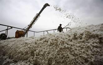 新疆棉花大戰 打到陸要害了嗎?