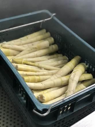 乾旱缺水泰安桂竹筍產量銳減 公所辦美食饗宴促銷