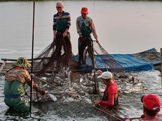 降水量水產保險補助申請月底截止 黃偉哲籲漁民趕快投保