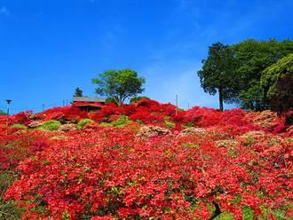 茨城縣笠間巿杜鵑花節將登場 美景、美藝、美酒齊展魅力