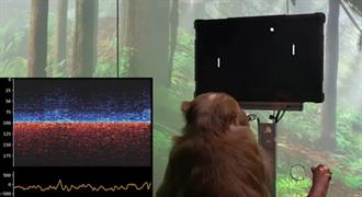 馬斯克炫耀他的猴子 裝上他投資的AI晶片會打電玩