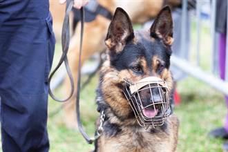 退役缉毒犬听到关键字 爆气狂瞪:想被逮捕?